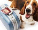 cachorro-viajar