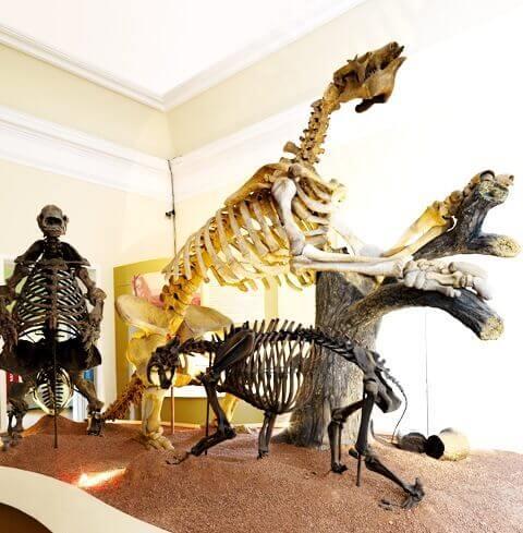 Esqueletos de Tigre dentes-de-sabre e preguiças gigantes no Museu Nacional UFRJ