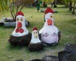 galinhas-em-porto-de-galinhas