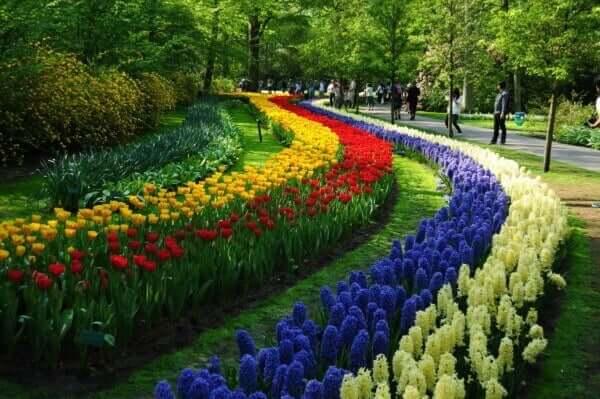 Flores em Holambra