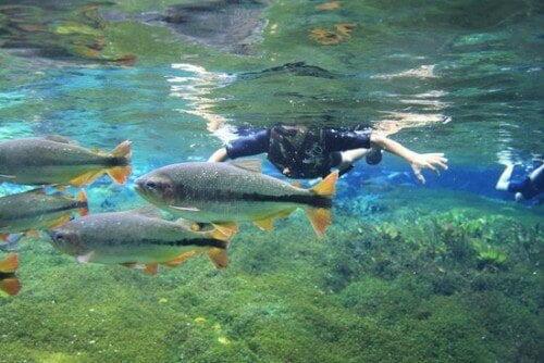 Aquário Natural em Bonito-MS